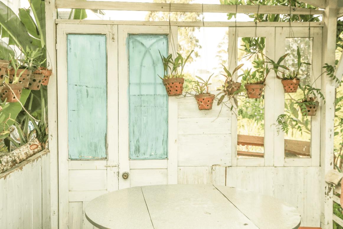 závesné rastliny